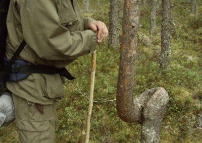 17 pysty, Kari ja mutkainen mänty, Koirajärvi 200516 PR